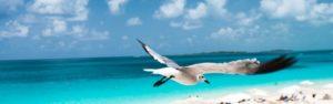 bird cruises over the Bahamas